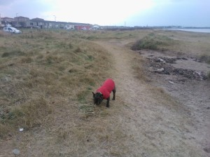 Winnie at Troon Beach this morning