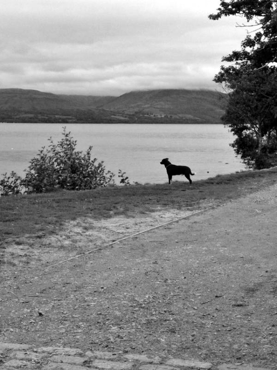 Taz staring out into the Loch